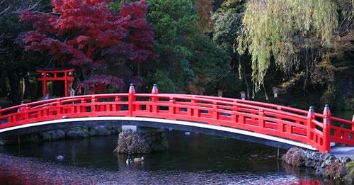 Energy Bridge To Healing